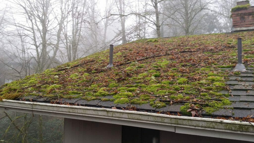 How Do I Get Moss Off My Roof All Clean Soft Wash