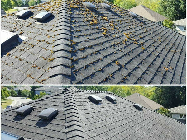 roof moss cleaning Service | All-Clean!
